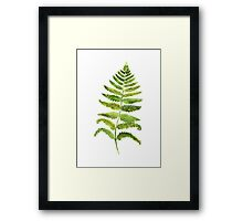 Fern Botanical Floral Painting Watercolor Illustration Drawing Poster Framed Print