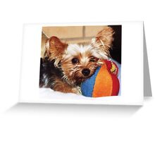 Cosby the yorkshire terrier Greeting Card