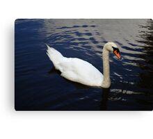 Swan at Oakfield Park Canvas Print