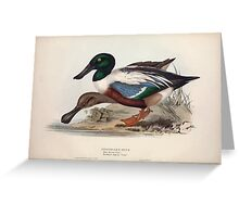 John Gould The Birds of Europe 1837 V1 V5 360 Shoveller Duck Greeting Card