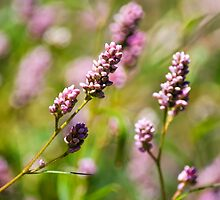Pink Wildflowers by Christina Rollo