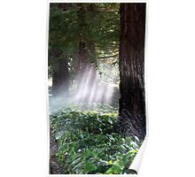 Mystical Moment with the Redwoods Poster