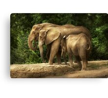 Animal - Elephant - Tight knit family Canvas Print