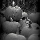Pumpkins by PicsbyJody