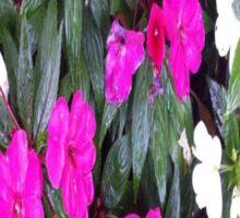 Pink and White Flower Power Sticker