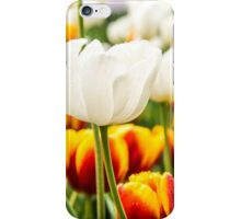 Pretty white and orange Tulips in a field of green iPhone Case/Skin