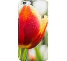 A majestic orange and yellow Tulip in a sea of White iPhone Case/Skin