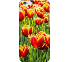 A mass of yellow and orange Tulips sitting in a field of green iPhone Case/Skin