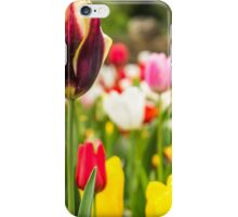 Colourful display of Tulips in bloom iPhone Case/Skin