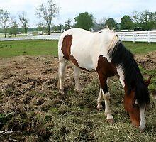 Living at the Kentucky Horse Park by SummerJade