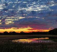 Sunrise Pond 5 by Carolyn  Fletcher