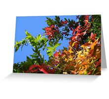Red, Green and Gold Virginia Creeper Against Blue Sky Greeting Card