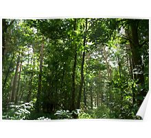 Green Leafy Forest Landscape Scene Poster