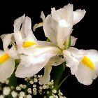 Iris & Gypsophlia by AnnDixon