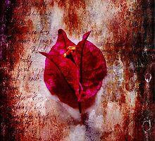 Solitude by Randi Grace Nilsberg