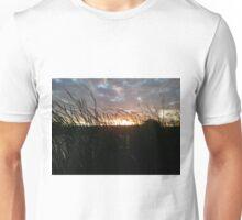 tall pond reeds at sunset Unisex T-Shirt