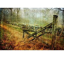 Open Gate Photographic Print