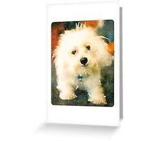 Shaggy Bichon Greeting Card
