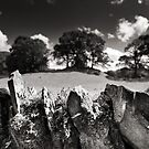 Dry Stone Wall on a Sunny Day by Andy Freer