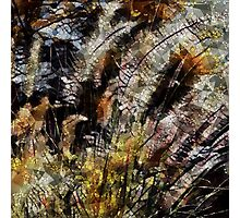 Pampas Grass Abstract Photographic Print