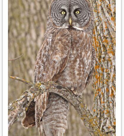 Camouflage-an owl's best friend Sticker