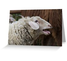 sheep on the farm Greeting Card