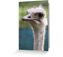 ostrich in the farm Greeting Card