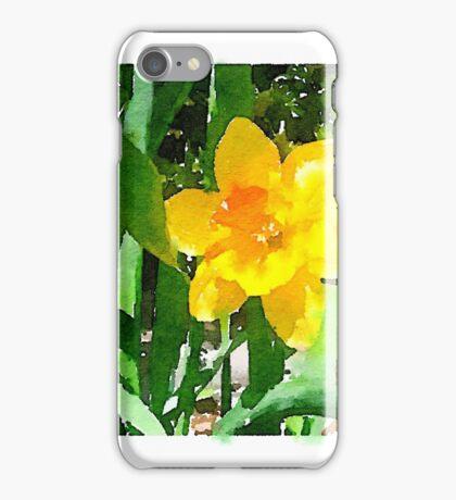 Daffodil in the Morning Sun iPhone Case/Skin
