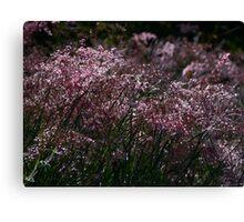 grass - hierba Canvas Print