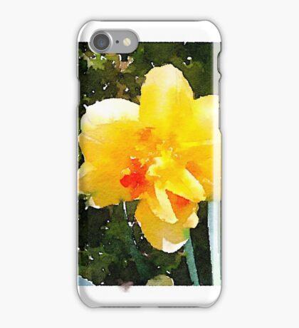 Double-bloom daffodil in the morning sun iPhone Case/Skin
