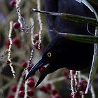 Loving Those Berries by byronbackyard
