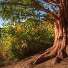 Golden Tree by Jessica Dzupina