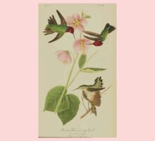 James Audubon Vector Rebuild - The Birds of America - From Drawings Made in the United States and Their Territories V 1-7 1840 - Anna Hummingbird One Piece - Short Sleeve