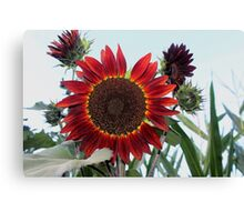 The Red Sunflower..... Canvas Print