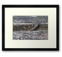 lizard on the river Framed Print