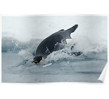 Diving Emperor Penguin Poster