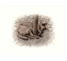 Dog Sleeping Curled Around Tree Art Print