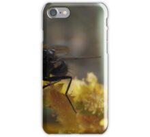 fly on wattle flower iPhone Case/Skin