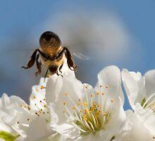 Honey Bee by SeeOneSoul