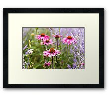 Summer garden Framed Print