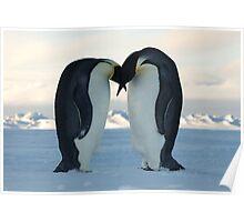 Emperor Penguin Courtship Poster