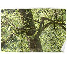 tree in spring Poster