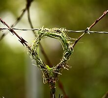 If life hands you razor wire - build a nest on it by Graeme M