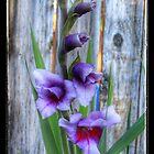 The Color Purple by Susan Littlefield