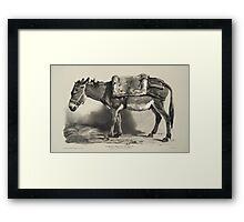 Donkey (Un âne) Vintage Illustration Framed Print