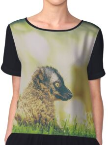 Lemur Portrait On Madagascar Island Chiffon Top