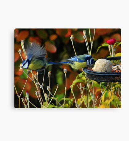 Peanuts are their favourite food Canvas Print