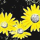 Daisies Lithograph Prints by Mark Malinowski