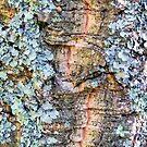 Lichen by Lynn Bolt