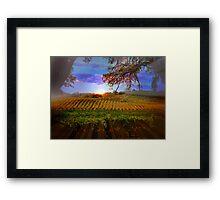 Colorful Fall Vineyard Framed Print
